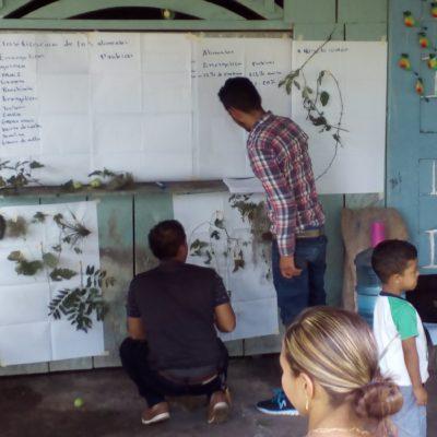 1. Identificacion de plantas silvestres de la zona que pueden servir para alimentacion del ganado – MIRAFLOR