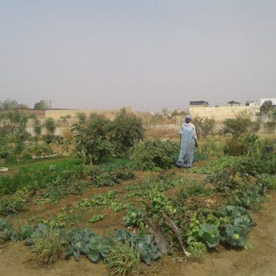 agricultureurbaineCEEDD