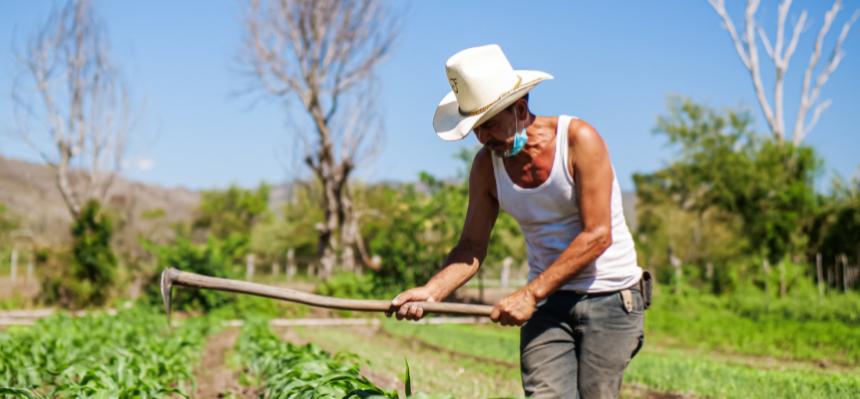 Agriculteur de Palacagüina Nicaragua